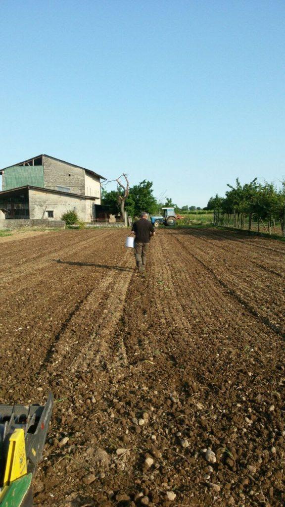 Grano saraceno coltura bio